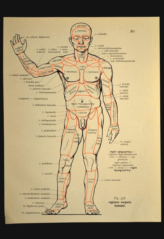 Anatomy Print Human Body Wall Art Medical Wall Decor Print Etsy