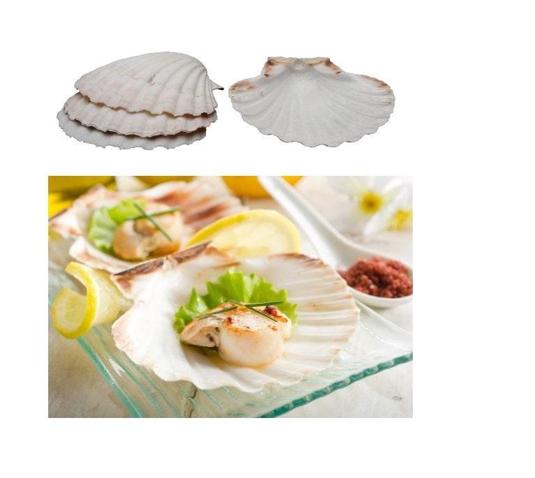 Cuisson naturelle obus de compter la 4, 4 pouces de cuisson des coquillages pour la compter cuisine et aliments, coquilles de mer élégant de service pour le service de fruits de mer ou apéritifs b0ab23