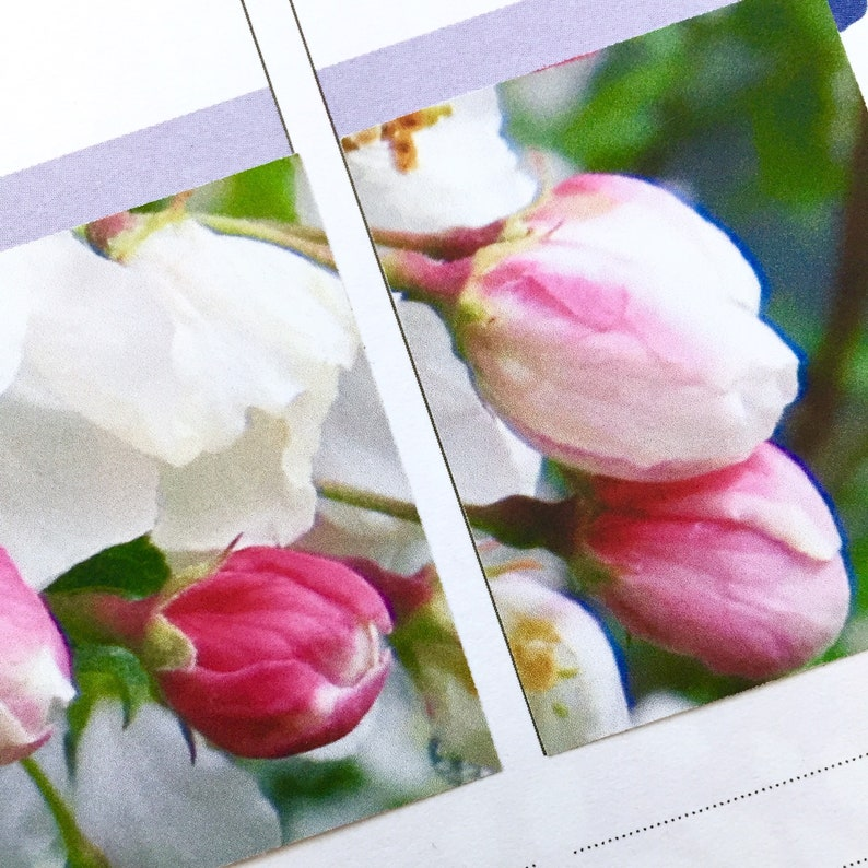 crabapple blossom planner stickers  white blossom photo image 0