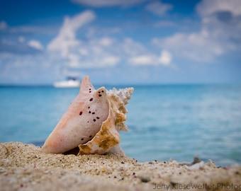 Beach Photography, Seashell, Conch Shell Photo, Caribbean Print, Blue Pink White Beige, Belize, Nautical Print, Fine Art Home Decor