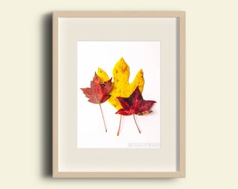 Red and Yellow Leaf Photo, Nature Photograph, Maple Leaf, Botanical, Rustic, Country, Fall, Autumn, Red Yellow, Wall Decor, Home Decor