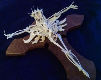 """Natural Bone """"Brain Christ"""" Skeletal Art Crucifix on hand craved Wooden Cross Macabre Oddities Made of a variety of ethical animal bones"""
