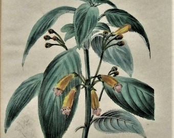 4 antique hand tinted flower lithographs plates fom The Botanist 1842  World post Christmas Gardner Wife Lady Art Gift small art