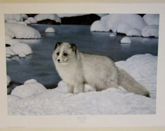 Charles Frace,Arctic Fox,limited edition print,Wall decor, wall art,signed art, wall hanging, gift by mail,wildlife gift,traveller gift