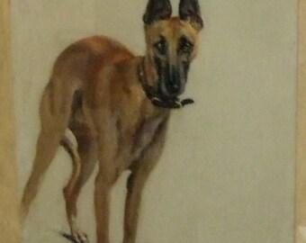 Marguerite Frobisher Jimmy Greyhound original vintage art 1929 listed English artist dog owner signed animal Gift