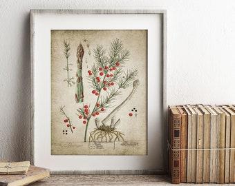 Asparagus Wall Art Print, Kitchen Vegetable Decor, Vintage Botanical Art, Farmhouse Kitchen Printable Art  Single Print #27 INSTANT DOWNLOAD