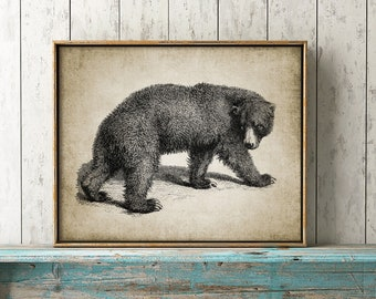 Bear Print - Vintage Bear Illustration - Bear Decor - Bear Wall Art - Digital Art - Printable Art - Single Print #151 - INSTANT DOWNLOAD