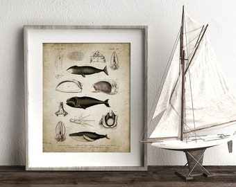 Whale Wall Art Print, Vintage Bathroom Decor, Antique Whales Poster, Nautical Marine Art Printable Art - Single Print #29 INSTANT DOWNLOAD