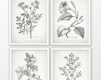 Antique Botanical Print Set of 4 - Botanical Print - Plant Drawing Print - Botanical Art Decor - Set Of Four Prints #1699 - INSTANT DOWNLOAD