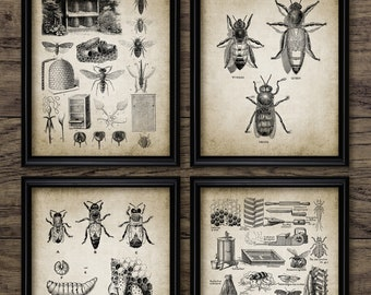 5cef58d0 Beekeeping Wall Art Set Of 4, Honey Bee, Queen Bee, Worker, Drone, Beehive,  Apiarist, Bee Yard, Apiary, Vintage Bees #3030 INSTANT DOWNLOAD