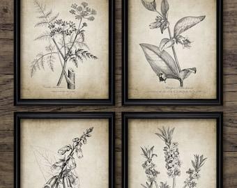 Antique Botanical Print Set of 4 - Plant Botanical Art Decor - Digital Art - Printable Art - Set Of Four Prints #190 - INSTANT DOWNLOAD