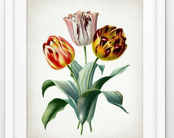 Tulip Flower Art Print - Tulip Plant Illustration - Botanical Flower Art - Botanical Print - Single Print #1731 - INSTANT DOWNLOAD