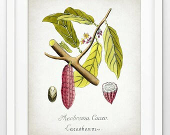 Cocoa Tree Art Print - Cocoa Plant Illustration - Cocoa Bean Decor - Botanical Print - Kitchen Decor - Single Print #1683 - INSTANT DOWNLOAD