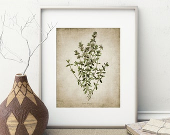 Thyme Herb Print - Thyme Herb Plant Illustration - Thyme Herb Botanical - Digital Art - Printable Art - Single Print #154 - INSTANT DOWNLOAD