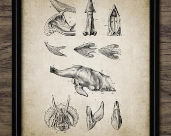 Animal skull print | Etsy