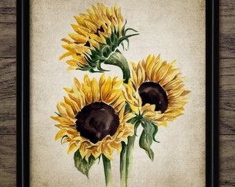 image about Printable Pictures of Sunflowers titled Sunflowers print Etsy