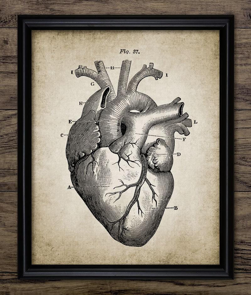 Herz Wand Kunstdruck Anatomie des menschlichen Herzens | Etsy