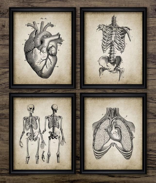 Menschliche Anatomie Print-Set 4 Anatomie Vintage Anatomie | Etsy
