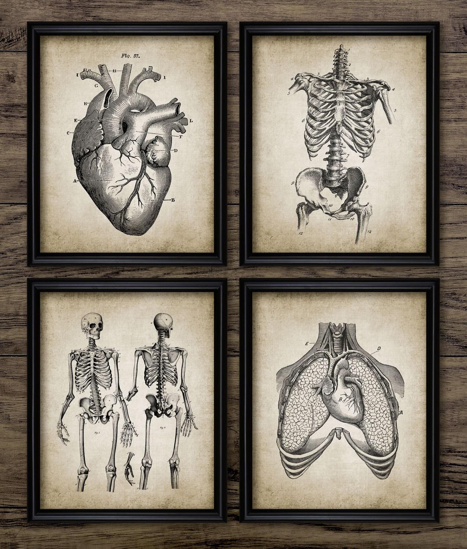 Human Anatomy Print Set Of 4 Human Anatomy Vintage Human Etsy