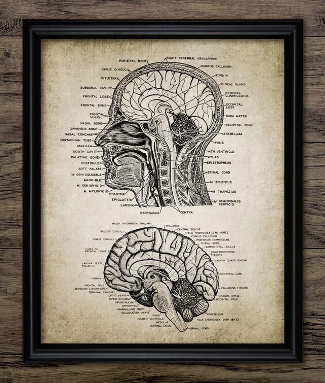 Vintage menschlichen Kopf und Gehirn Anatomie Print | Etsy