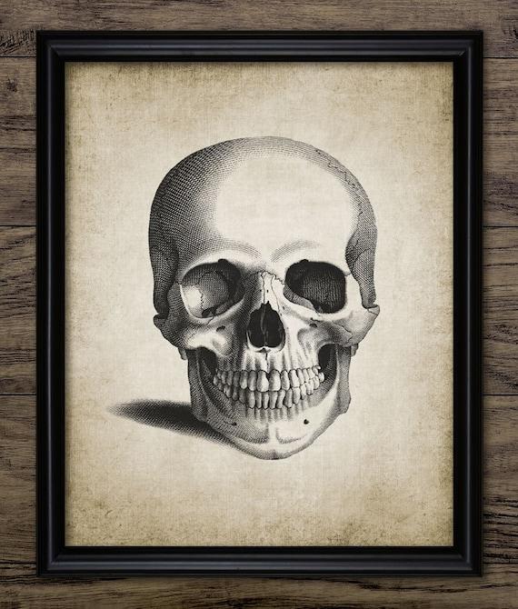 Grabado de calavera anatomía humana cráneo humano Vintage | Etsy