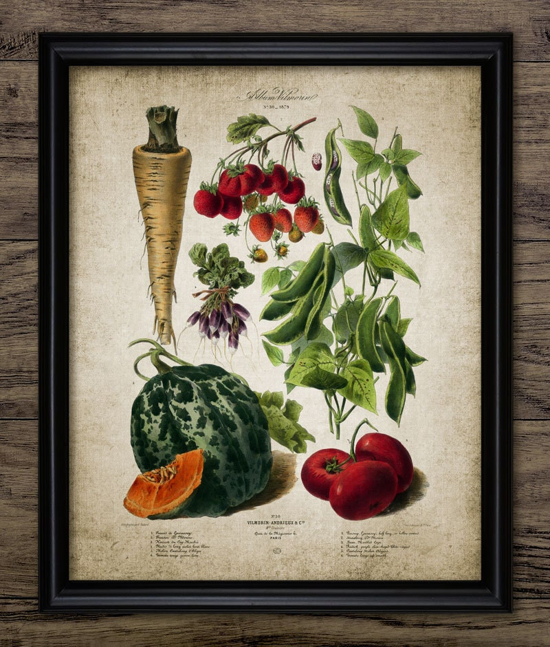 Kitchen Art Vegetables Print Botanicals Kitchen Art: Vegetables Print Kitchen Vegetable Plants Botanical Art