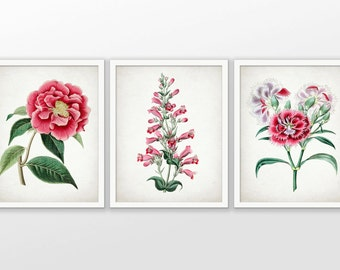 Pink Flower Art Print Set of 3 - Pink Botanical Art - Pink Decor - Botanical Print - Set Of Three Prints #1727 - INSTANT DOWNLOAD