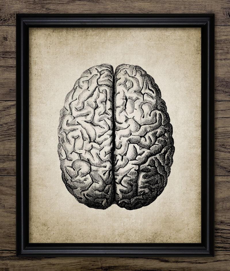 Gehirn Anatomie Vintage menschliche Gehirn menschliche | Etsy