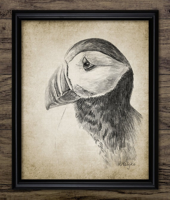 Puffin Pencil Drawing, Printable Puffin Drawing, Puffin Bird Decor, Cute Puffin Seabird Wall Art, Auk Bird Print #3388 INSTANT DOWNLOAD