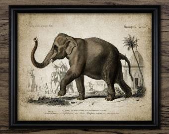 Indian Elephant Print - Vintage Elephant Illustration - Elephant Art - Digital Art - Printable Art - Single Print #57- INSTANT DOWNLOAD