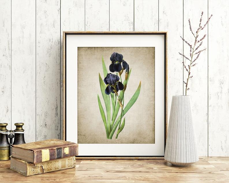 Blue Iris Wall Art Print, Vintage Botanical Printable Art, Irises Antique  Art, Vintage Flowers Poster - Single Print #6 INSTANT DOWNLOAD