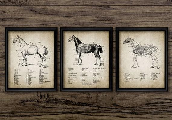 Vintage Pferd Anatomie Print-Set 3 Pferd Anatomie Abbildung | Etsy