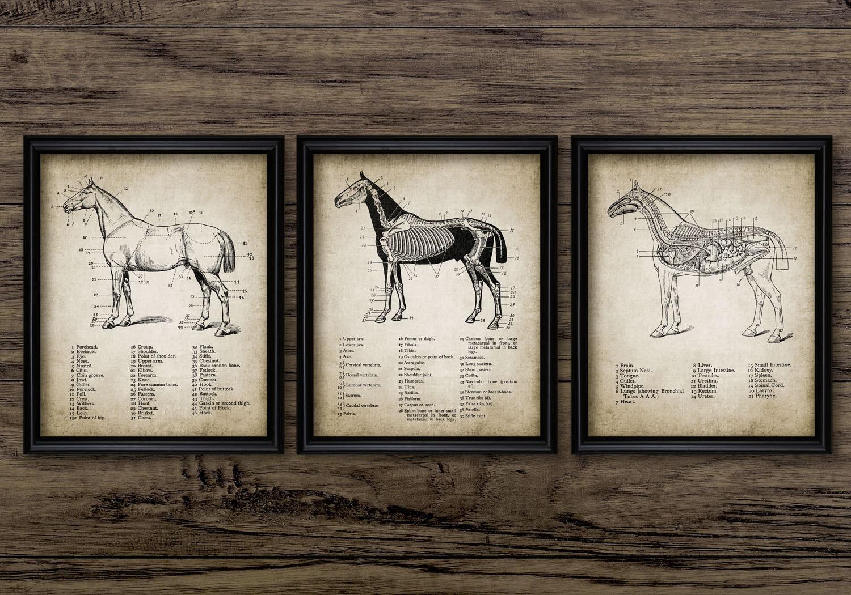 Vintage Horse Anatomy Print Set Of 3 Horse Anatomy Etsy