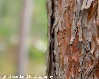 Red Pine Tree Print - Nature Photography - Minnesota Photo - Boundary Waters Prints - BWCA Images - Tree Photography - Bark Photography