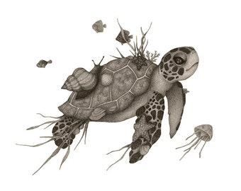 Sea Turtle illustration print