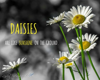 Flower Photography- Daisies Decor, Quote Decor, Selective Color, Fine Art Photo, Nature Photography -019 (A or B)