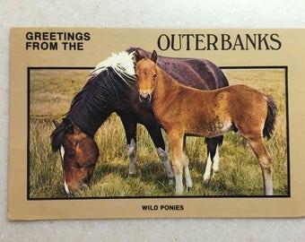 Vintage Postcard Outer Banks N C Greetings Wild Ponies 1988