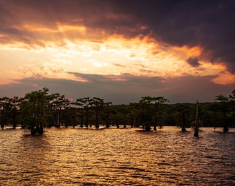 Bald Cyprus Trees are Silhouetted Against a Dramatic Sunset at Caddo Lake, Texas -- Prints, Matted and Mounted, Framed, Canvas, Metal
