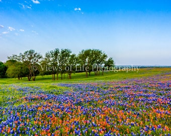 Sunrise Over a Field of Bluebonnets and Indian Paintbrush - Texas - Western   -- Prints, Matted and Mounted, Framed, Canvas, Metal