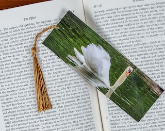 Laminated bookmark of Beautiful Swimming Swan