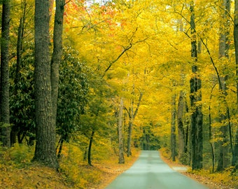 A Forest Road in Autumn -- Prints, Matted and Mounted, Framed, Canvas, Metal