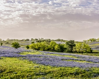 Sunrise Over a Field of Bluebonnets - Texas - Western   -- Prints, Matted and Mounted, Framed, Canvas, Metal
