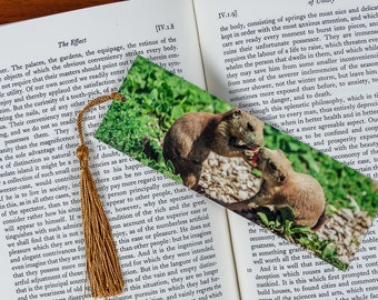 Laminated bookmark of a Two Prairie Dogs Sharing a Carrot