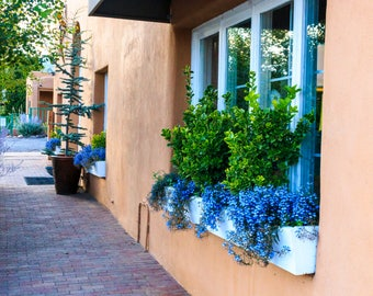 A Window Box in Santa Fe, New Mexico   -- Prints, Matted and Mounted, Framed, Canvas, Metal