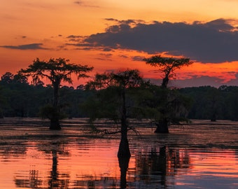Three Silhouetted Trees at Dusk in the Caddo Lake Swamp -- Prints, Matted and Mounted, Framed, Canvas, Metal