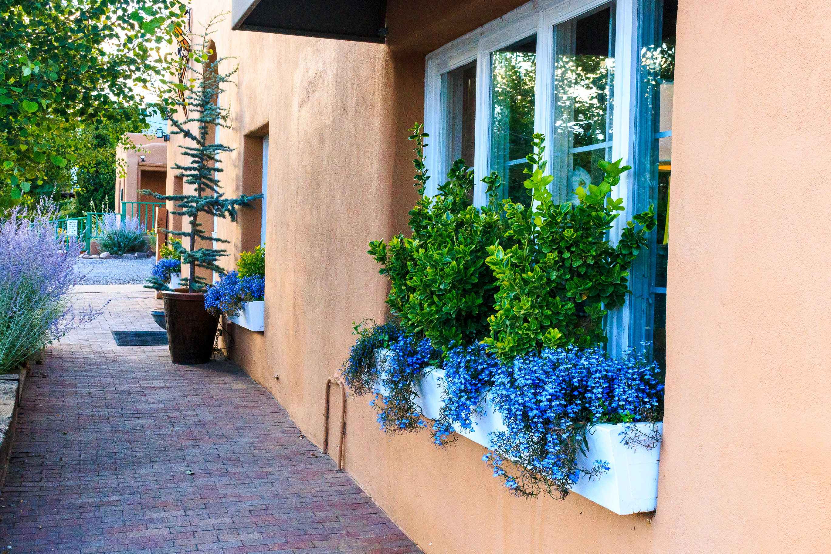 Canvas Santa Fe >> A Window Box In Santa Fe New Mexico Prints Matted And Mounted