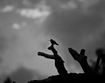 Hummingbird, Rocky Mountain National Park