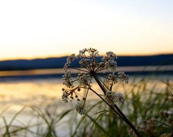 Sunset Photography, Alaska Photography, Nature Photography, Flower Photography, Wall Art, Home Decor, Fine Art Print, 8x10 Print