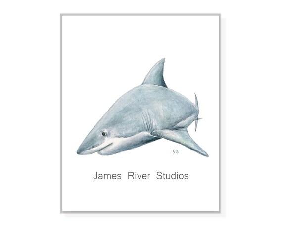 datazione squalo sondaggio di incontri globale 2015