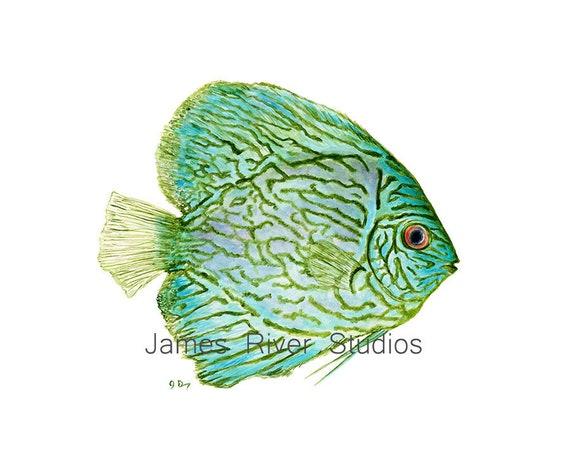 Fisch datiert Website usa